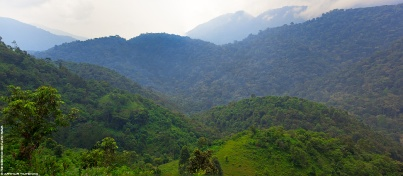 View at Bwindi Impenetrable Forest from buffer zone.